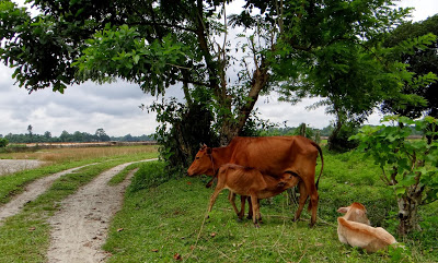 Rural Bengal, Bengal Countryside