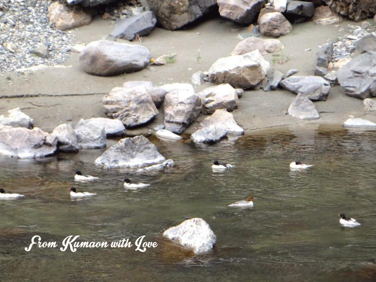 Kumaon Homestay Uttarakhand