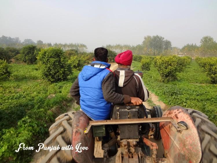 Farm tourism in Punjab