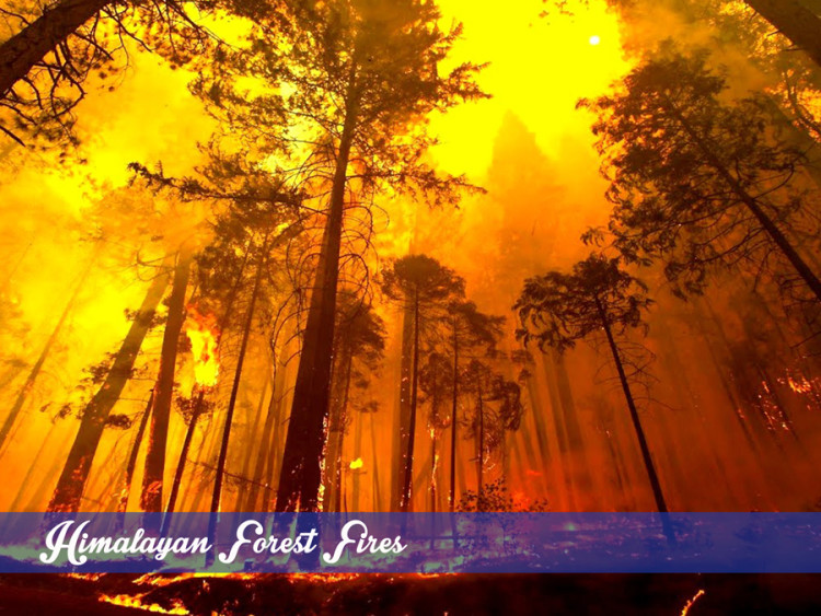 Himalayan forest fires in India, Forest fires Uttarakhand, Forest fire management in India