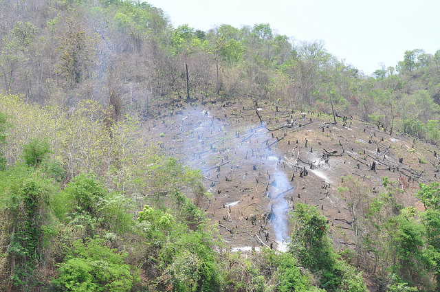 Shifting cultivation practice, Forest fire