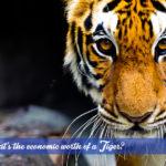 Tiger conservation in Jim Corbett National Park