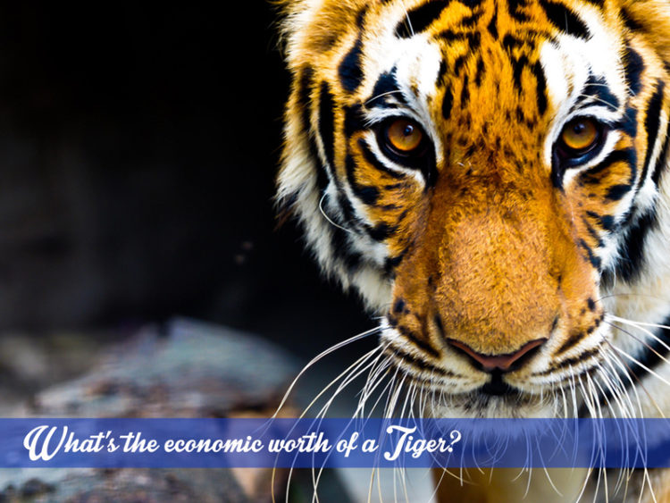 Tiger conservation in Jim Corbett National Park