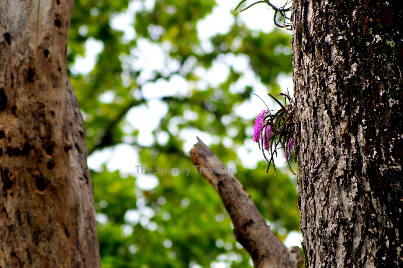 Wild Orchids in Jim Corbett National Park