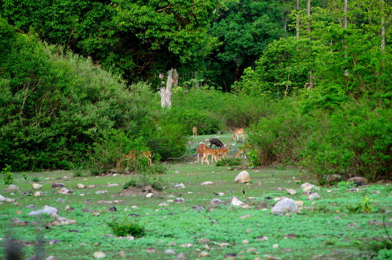 Wildlife in Jim Corbett